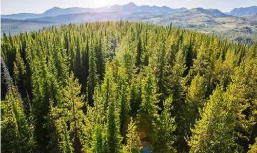 森林认证.jpg