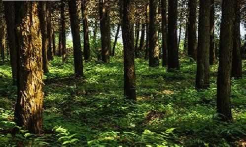 森林认证标准.jpg