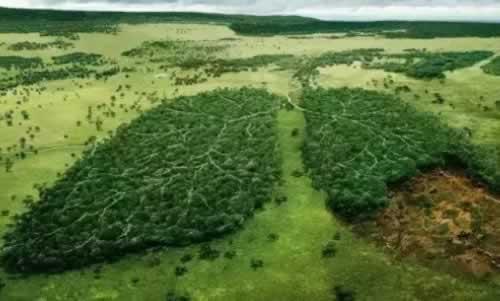 森林环保.jpg