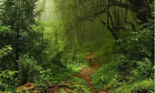 森林认证2.jpg