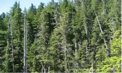 森林认证1.jpg
